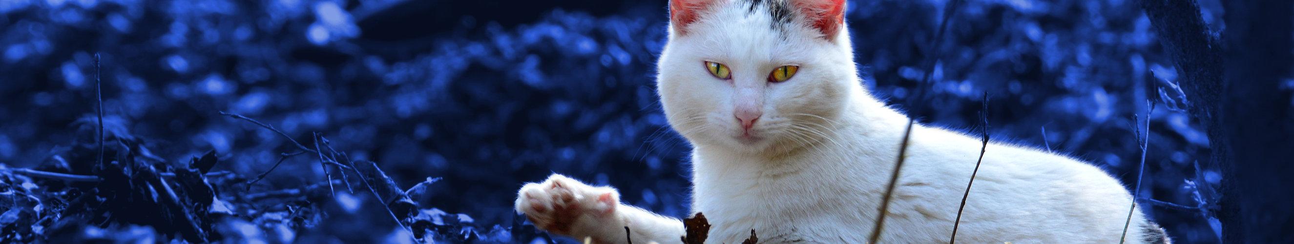 Kattebellen