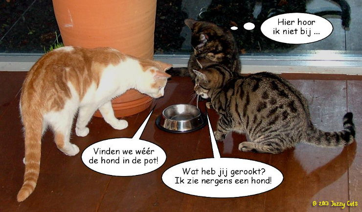 Hond in de pot